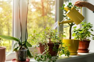 Bringing Your Garden Indoors