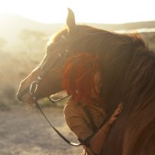 Coping With COVID-19: The Value of Horse Therapy