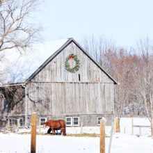 Preparing your Barn for Cold Weather