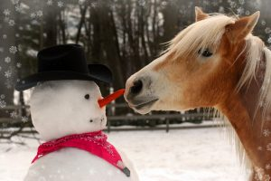 Enjoying The Winter With Your Horse